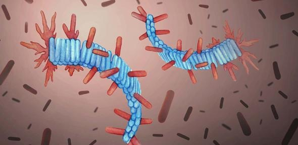 Artist's rendering of protein fibrils (in blue) and healthy proteins from computer simulations